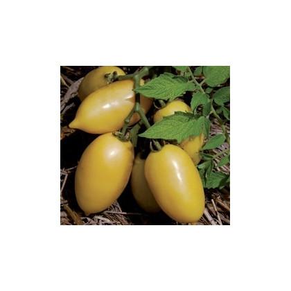 Paradajka- Párok- semiačká paradajky- 6 ks