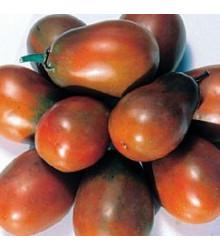 Paradajka - Čierna slivka - semená paradajky - semiačka - 6 ks