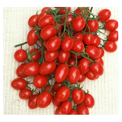 Paradajka- Rosalita- semiačká paradajky- 7 ks