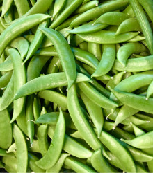 Hrach cukrový Zuccola - Pisum sativum - semená - 10 g
