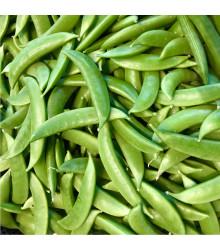 Hrach cukrový Zuccola - Pisum sativum - semená hrášku - 10 g