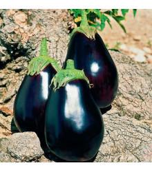 Baklažán skorý - Solanum melongena - semená baklažánu - 100 ks