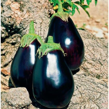 Baklažán skorý český - Solanum melongena - semená - 100 ks