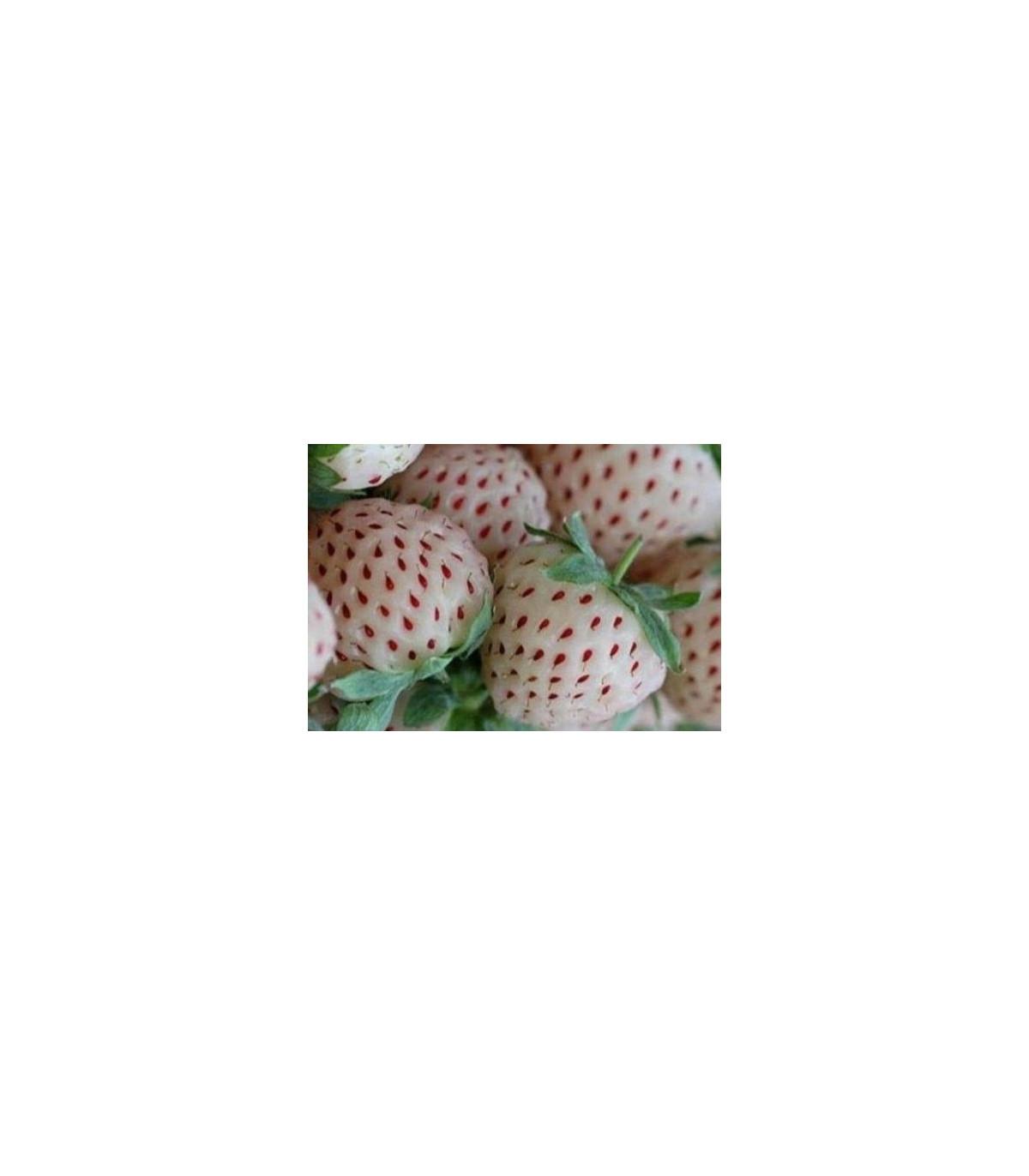 Jahodník biely - Fragaria vesca - predaj semien jahodníku - 10 ks