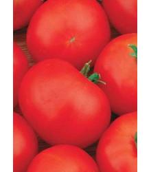 Paradajka Hana - kríkové paradajky - Lycopersicon Esculentum - semená paradajok - 20 Ks