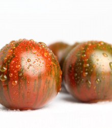 Paradajka Black Zebra - Solanum lycopersicum - rajčiak - semená - 7 ks