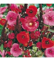 Zmes letničiek Záhradný sen - červená - semená - 0,9 g