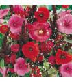 Letničky zmes - Záhradný sen v červenom - 0,9 gr