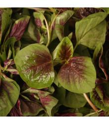Láskavec trojfarebný červený - Amarant - Amaranthus tricolor - semená - 270 ks