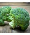 Brokolica Green Magic F1 - Brassica oleracea L. - semená - 20 ks