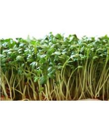 Žerucha zahradná - semená žeruchy - semiačka - 2,5 g