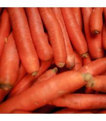 Mrkva Autumn King 2 - Daucus carota - semená mrkvy - 1 gr