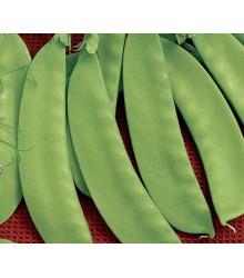 Hrach cukrový Jessy - Pisum sativum - semená hrášku - 20 g