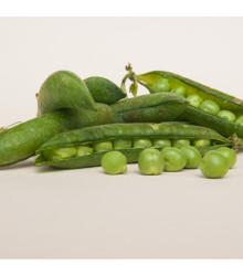 Hrach dreňový Winner - Pisum sativum - semená hrášku - 15 g
