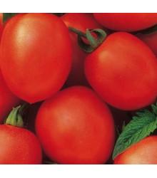 Paradajka kríčková Salus - Solanum lycopersicum L. - rajčiak - semená - 0,2 g