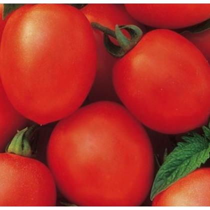 Rajčiak Salus - kríčkový - Solanum lycopersicum L. - predaj semien rajčín - 0,2 g