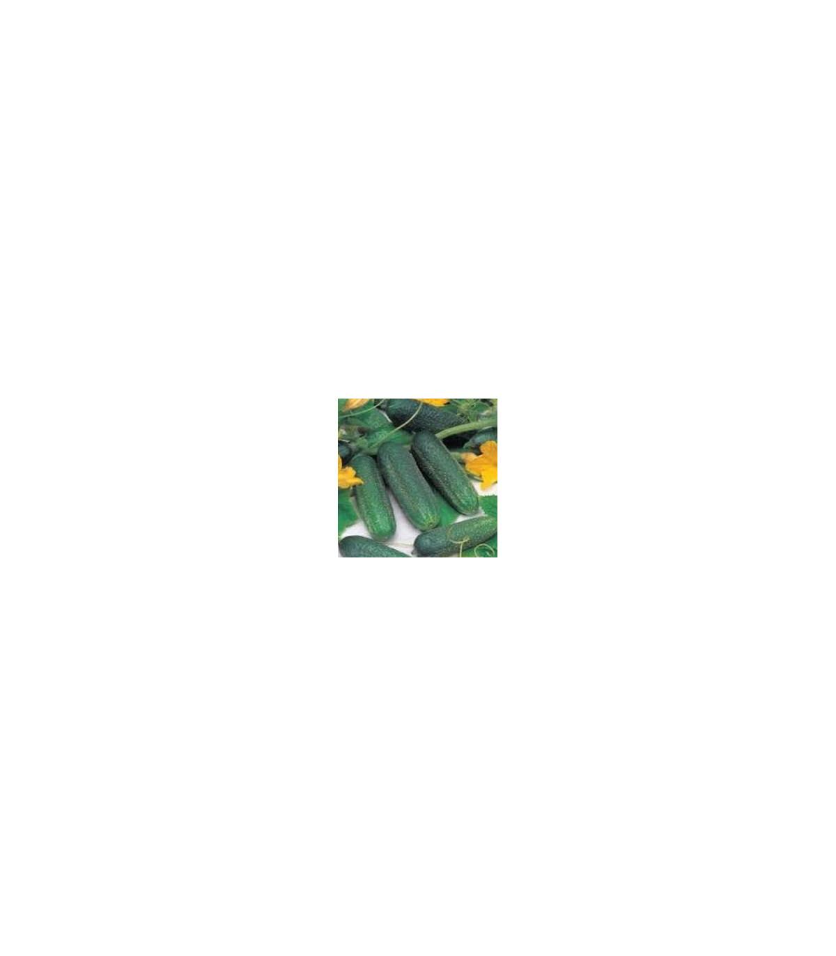 BIO uhorka nakladačka F1 Diamant - Cucumis sativus - 8 ks