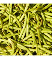 Fazuľa záhradná tyčová Hilda - Phaseolus vulgaris - predaj semien fazule - 20 ks