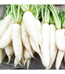 Reďkovka Cencúľ na pole i rýchlenie - predaj semien reďkovky - 100 ks