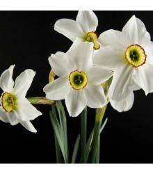 Narcis Poeticus Pheasant eye Recurvus - Narcissus L. - cibuľoviny - 3 ks