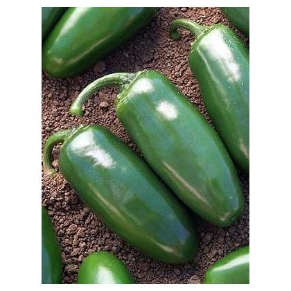 Chili Chichimeca- semená Chili- 6 ks