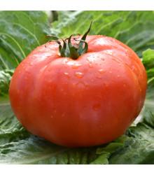 Paradajka Soldaki - Lycopersicon esculentum - rajčiak - semená - 7 ks