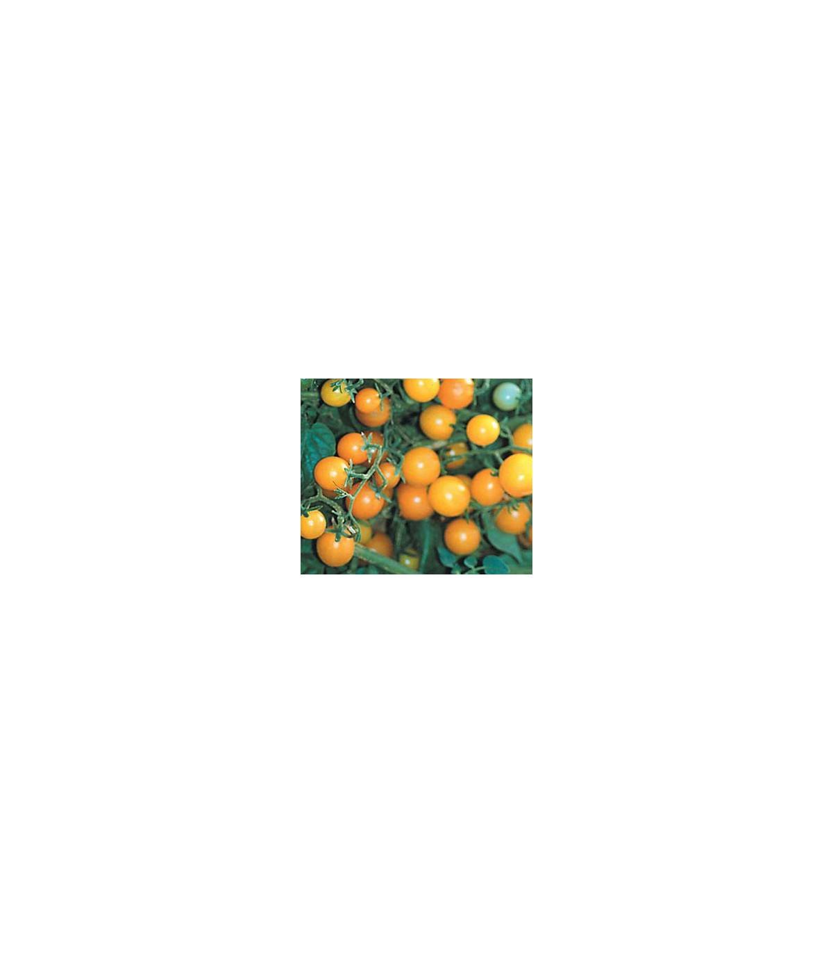 Divá paradajka žltá - Lycopersicon pimpinellifolium - predaj semien divých paradajok - 6 ks
