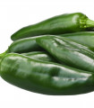 Chili Ancho- semená chili- 6ks