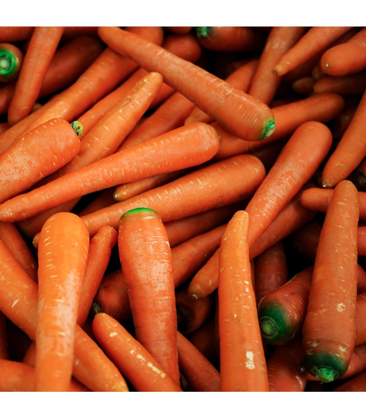 Mrkva Rote Riesen - Daucus carota - semená - 1 g