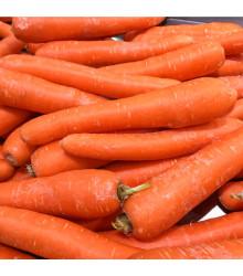 Mrkva obyčajná dlhá červená - Daucus carota - semená - 1 g