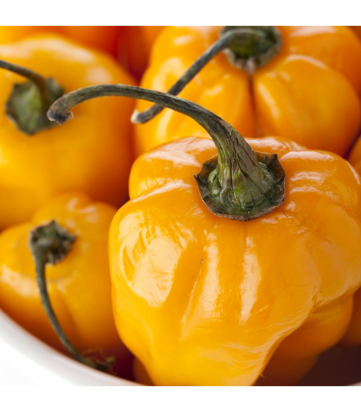 Chilli Scotch Bonnet oranžové - Capsicum Chinense - semená - 6 ks