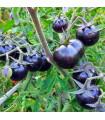 Paradajka kolíková Blueberry - predaj semien rajčín - 6 ks
