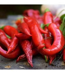 Chilli - Kajenské korenie - extra tenké - semená chilli - semiačka - 7 ks