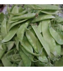Hrach cukrový Delikata - Pisum sativum - semená hrášku - 12 g