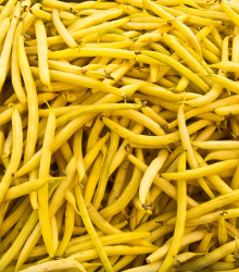 More about Fazuľa kríčková Golddukat - Phaseolus vulgaris - predaj semien - 20 ks