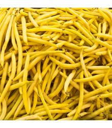 Fazuľa kríčková Golddukat - Phaseolus vulgaris - semená - 20 ks
