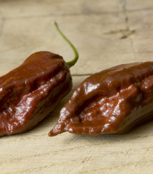 More about Chilli Black Naga - Capsicum Chinense - semená - 6 ks