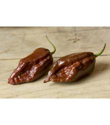 Chilli Black Naga - predaj semien - 6 ks