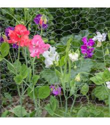Hrachor voňavý Cuthbertson - zmes - Lathyrus odoratus - semená - 16 ks