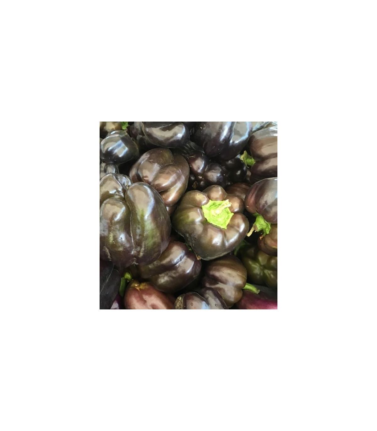 Paprika hnedá - Baby bell minipaprika - Capsicum annuum - 10 ks
