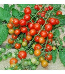 Divoké paradajky - Solnum pimpinellifolium - semená paradajky - semiačka - 6 ks