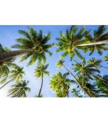 Balíček - paliem a palmičiek - darčekové balenie zadarmo