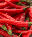 Balíček - obľúbených chilli - set pre pestovateľov