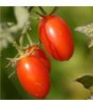 Rajčiak kríčkový Roma - semená rajčiaka - semiačka - 0,2 gr