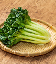 Pak Choi čínska kapusta Sagami - Ázijská zelenina - predaj semien ázijskej zeleniny - 0,3 gr