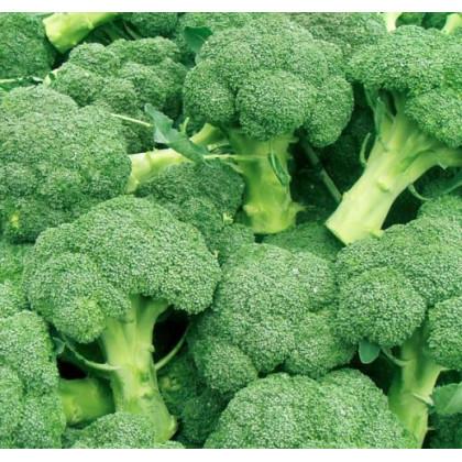Brokolica Leonora - Brassica oleracea - semená brokolice - semiačka - 100 ks