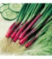 Cibuľa jarná červená Redmate - semená cibule - semiačka - 1 gr