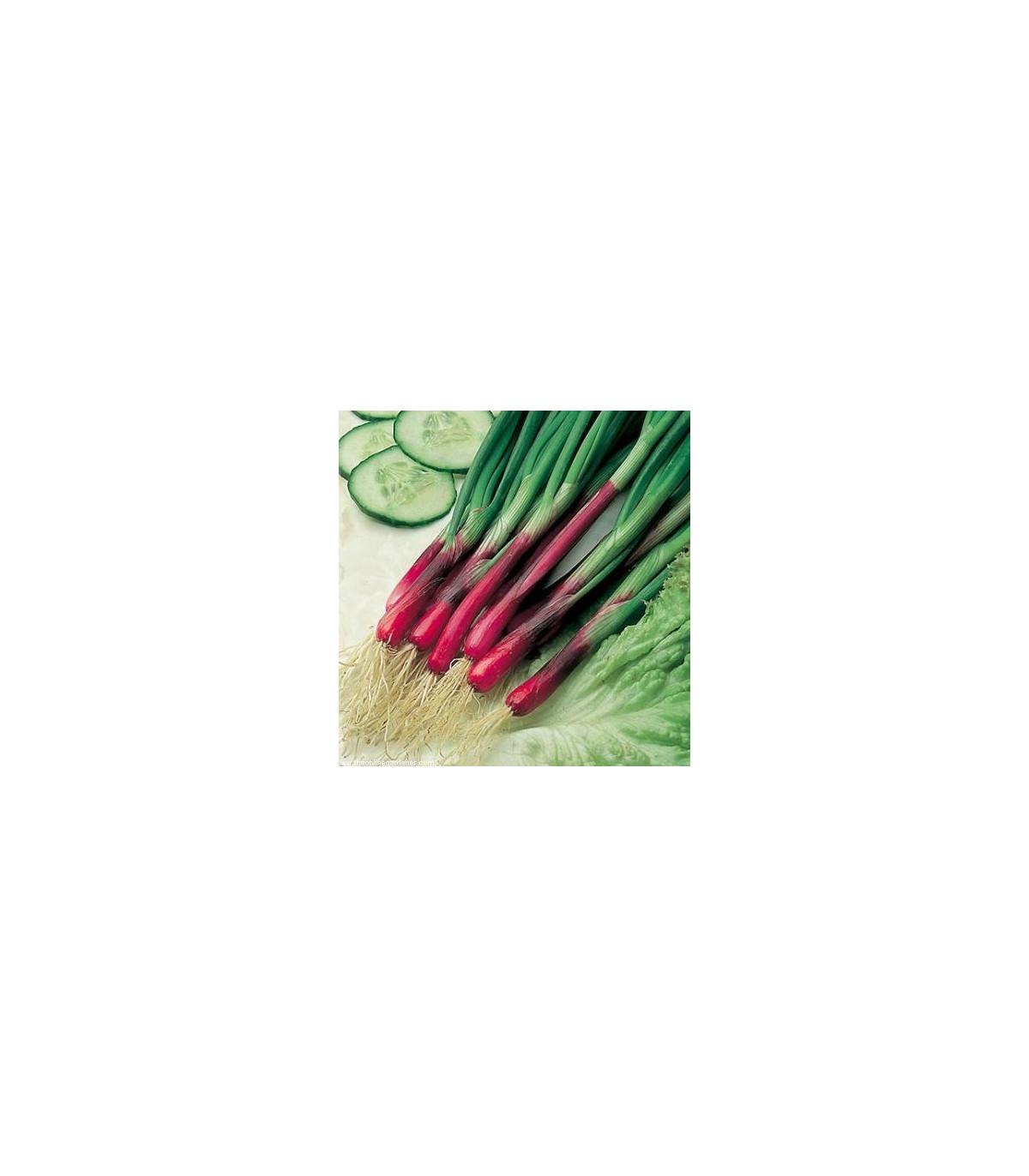 Cibuľa jarná červená Redmate - Allium cepa - semená - 100 ks