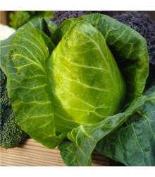 Kapusta biela hlávková Filderkraut - Brassica oleracea - semená - 0,8 g