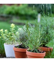 Semienka korení do Vašej kuchyne - mix semienok korení - 0,5 gr